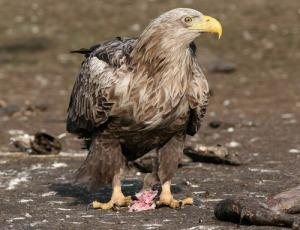 vogel02